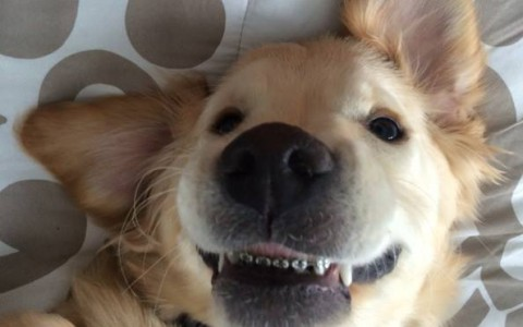 Il selfie di Wesley, il cane con l'apparecchio per i denti